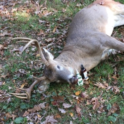 11-3-16 North Carolina deer 2